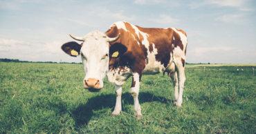 limpieza y desinfección industria lactea 370x194 - Limpieza y desinfección, Industria Láctea.